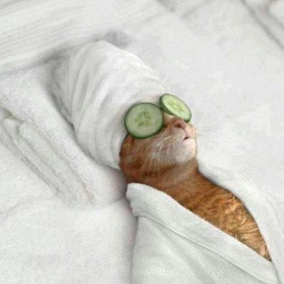 ЗОО Мир - корма для кошек и собак — Груминг и аксессуары для кошек — Уход