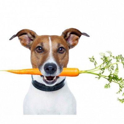 ЗОО мир - удиви свою рыбку — Диета для собак — Корма