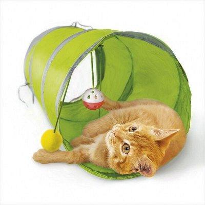 ЗОО Мир - корма для кошек и собак — Игрушки для кошек — Игрушки