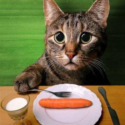 ЗОО Мир - корма для кошек и собак — Диета для кошек — Корма