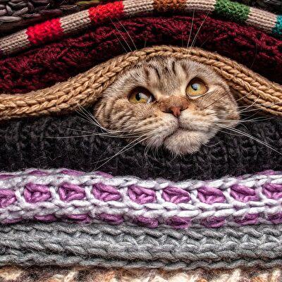 ЗОО Мир - корма для кошек и собак — Домики, лежанки, когтеточки — Домики и когтеточки