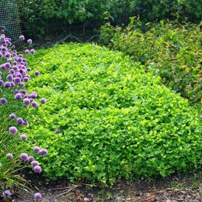 Садово-Огородная Ярмарка🌿 уДачный сезон.  — Сидераты🌾 — Удобрения и агрохимия