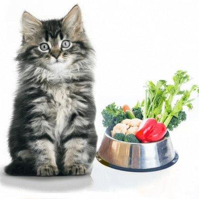 ЗОО Мир - корма для кошек и собак — Лакомства для кошек — Лакомства и витамины