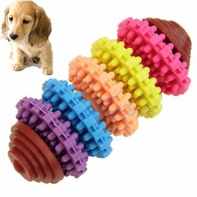 Domosed. online — Товары для животных — Наличие: игрушки для кошек и собак