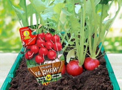 """Семена АЭЛИТА: все в наличии от 4руб!!! — Серия """"Сеялка плюс"""". Несколько функция в одной упаковке — Сад и огород"""