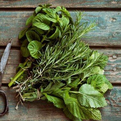 Семена Алтая. — Зелень — Семена зелени и пряных трав