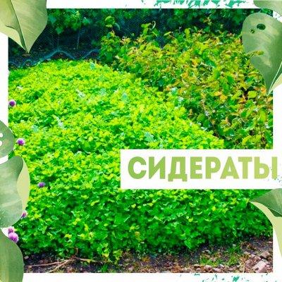 Нужная покупка👍 Гаджеты для садоводов — Сидераты🌾 — Удобрения и агрохимия