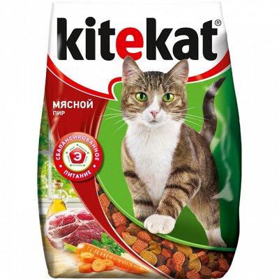 Domosed. online — Товары для животных — Наличие: корма и лакомства для кошек