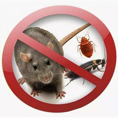 Все для сада и огорода (много новинок)  — Средства от насекомых и грызунов — Средства от тараканов, клопов, грызунов и насекомых
