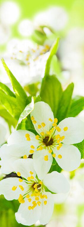 Фотообои Цветы светлые