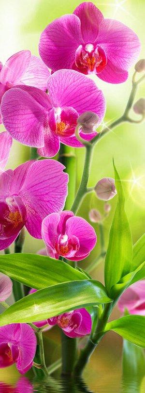 Фотообои Сияющая орхидея
