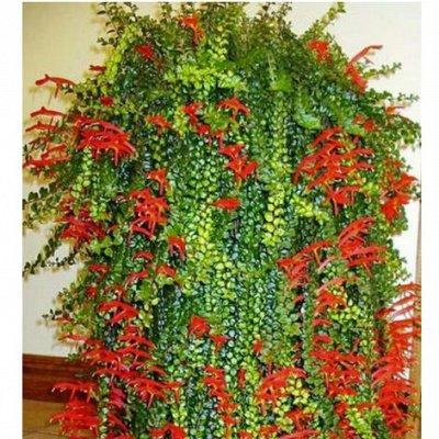Комнатные цветы. Большой ассортимент и выбор пунктов выдачи — Колумнеи. Укоренённые черенки — Декоративноцветущие