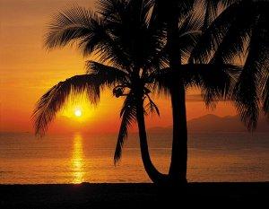 Фотообои Palmy Beach Sunrise