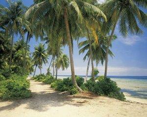 Фотообои Кокосовый пляж