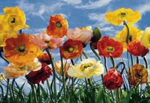 Фотообои Цветы маки
