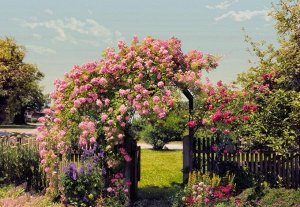 Фотообои Розовые цветы в саду