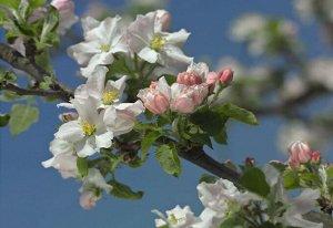 Фотообои Цветение