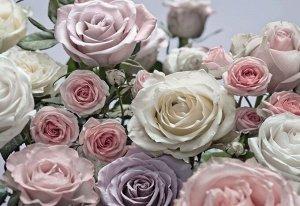 Фотообои Цветы розы