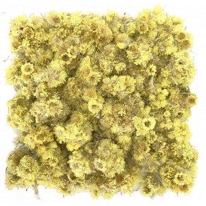 Бессмертник (песчаный) цветы 100 г