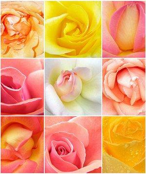 Фотообои Розы микс