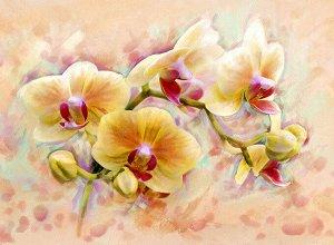 Фотообои Орхидея живопись