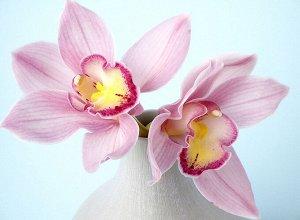 Фотообои Орхидея 3