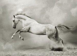 Фотообои Белый конь