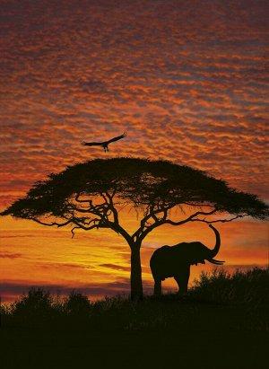 Фотообои Африканский закат