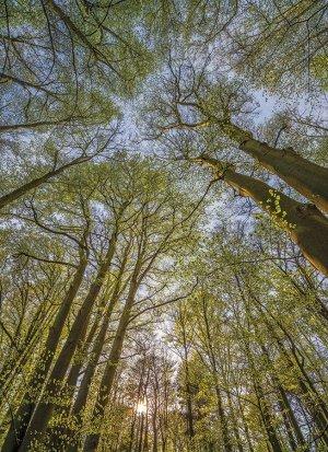 Фотообои Под деревьями