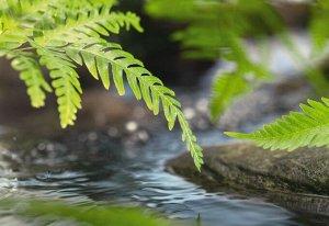 Фотообои Вдоль реки