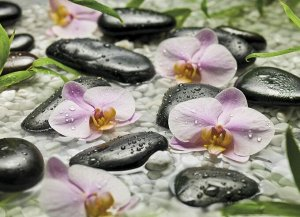 Фотообои Цветы орхидеи