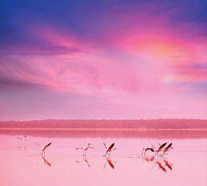 Фотообои Фламинго на закате