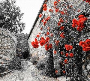 Фотообои Красные розы