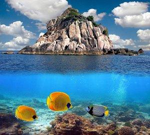 Фотообои Три рыбки