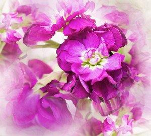 Фотообои Цветы дымка