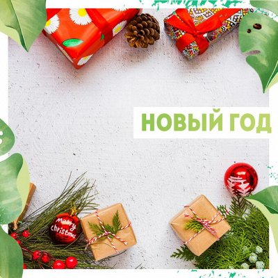 Нужная покупка👍 Комнатные цветы - выращивание и уход — Новый год🎄 — Подарочная упаковка