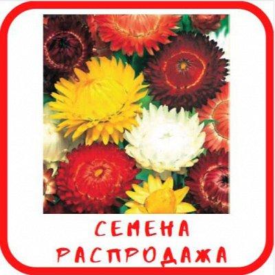 """Крем мёд от """"Медолюбов"""" — Семена РАСПРОДАЖА — Семена однолетние"""