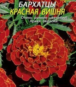 Бархатцы Красная Вишня откл. 45шт Плазмас
