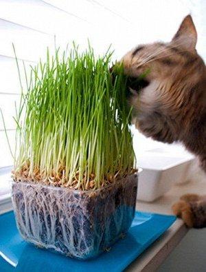 Трава для кошек 10г НОВИНКА ПФ