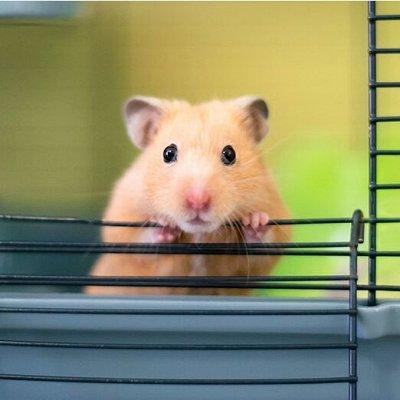 Защитный экран - чистота на кухне и даче — Мелочи для животных — Для животных