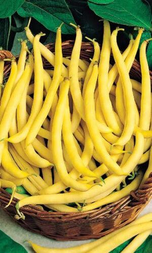 Кружевница овощная 5г А фасоль