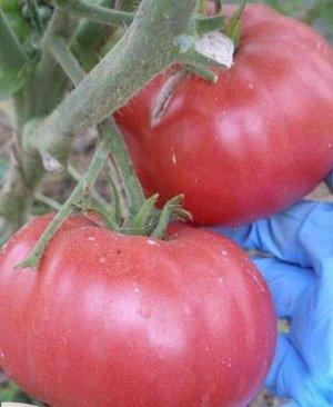 Королевская мантия 20шт СС томат