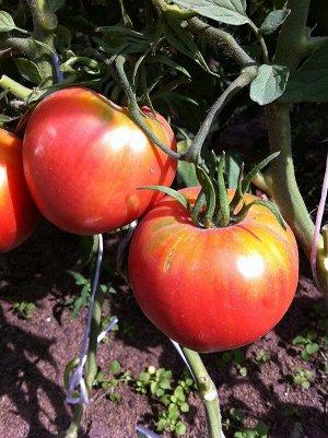 Супербомба 20шт СС томат