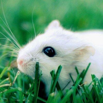 Распродажа луковичных и семян! Количество ограничено! — Травы для животных — Семена зелени и пряных трав