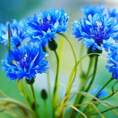 Распродажа луковичных и семян! Количество ограничено! — Различные цветы — Семена цветов