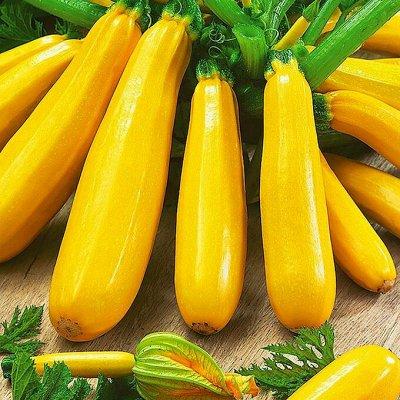 Распродажа луковичных и семян! Количество ограничено! — Кабачки, баклажаны, патиссоны — Семена овощей