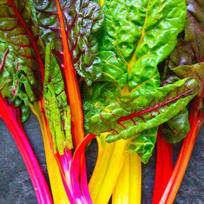 Распродажа луковичных и семян! Количество ограничено! — Свекла, мангольд — Семена зелени и пряных трав
