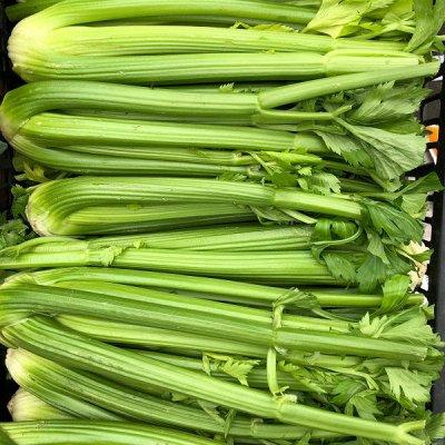 Распродажа луковичных и семян! Количество ограничено! — Сельдерей — Семена зелени и пряных трав