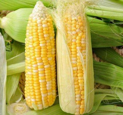 Распродажа луковичных и семян! Количество ограничено! — Кукуруза — Семена овощей