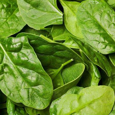 Распродажа луковичных и семян! Количество ограничено! — Шпинат, щавель — Семена зелени и пряных трав